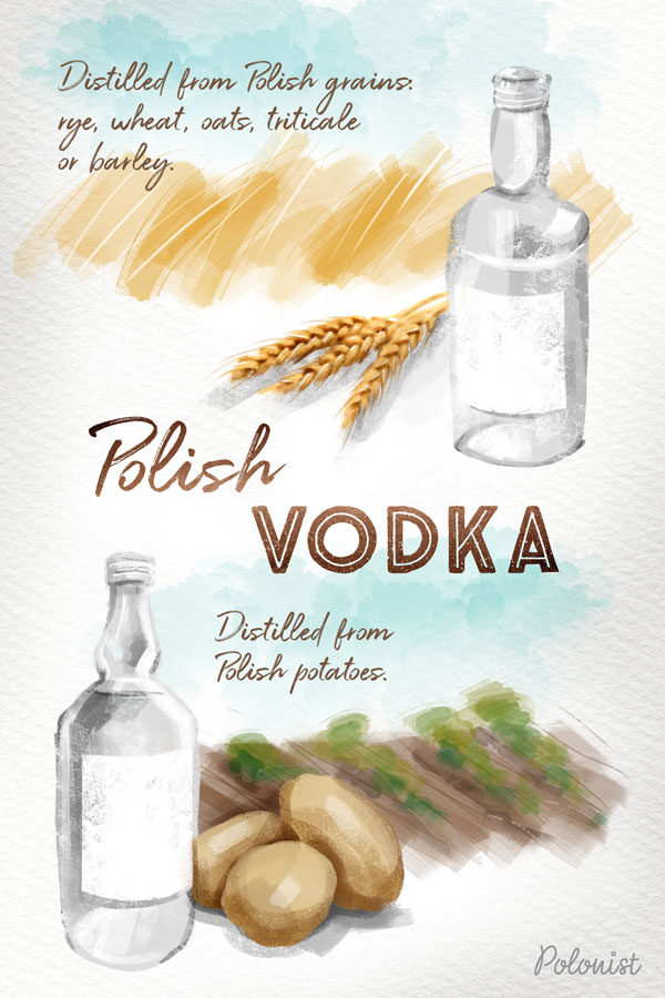 Illustration / Infographic showing Polish vodka distilled from grain (wheat, rye) or potatoes