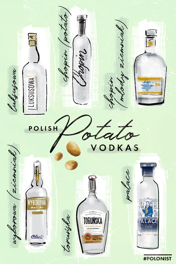 Hand drawn illustration / infographic depicting Polish potato vodkas: Luyksusowa, Chopin Potato, Chopin Młody Ziemniak, Wyborowa Ziemniak, Toruńska, Palace. Illustrated by Kasia Kronenberger.