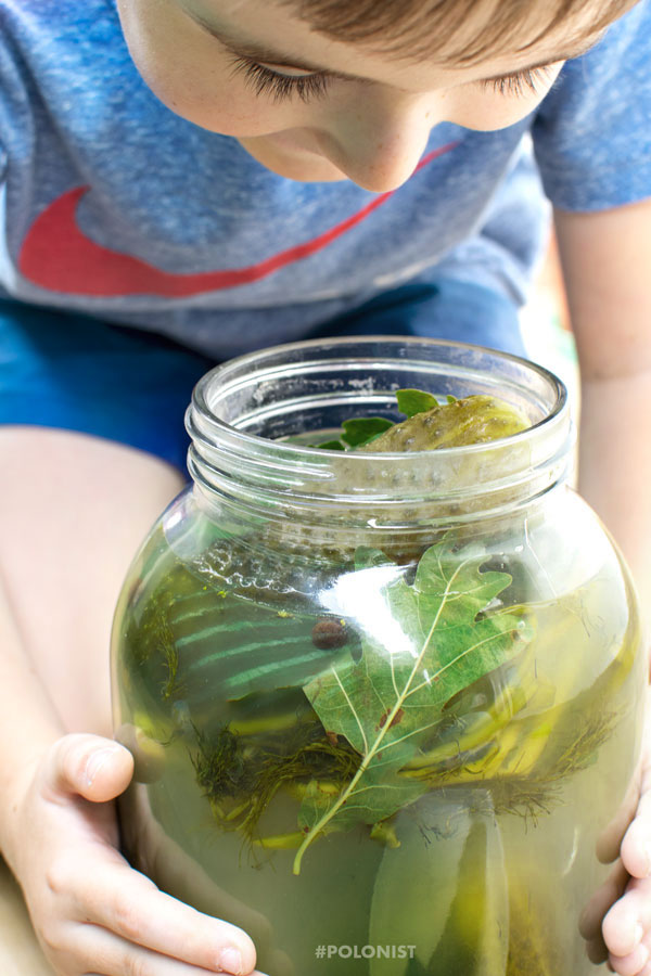 Young Boy holding a Jar of Polish Style Dill Pickles in Brine