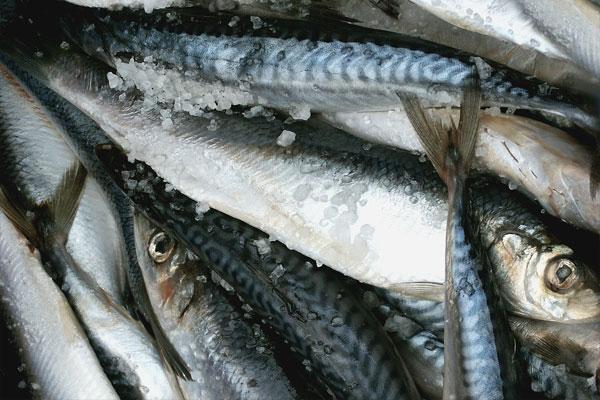 Whole herring fish on ice